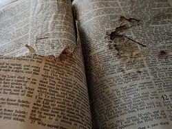 Bible Ripped